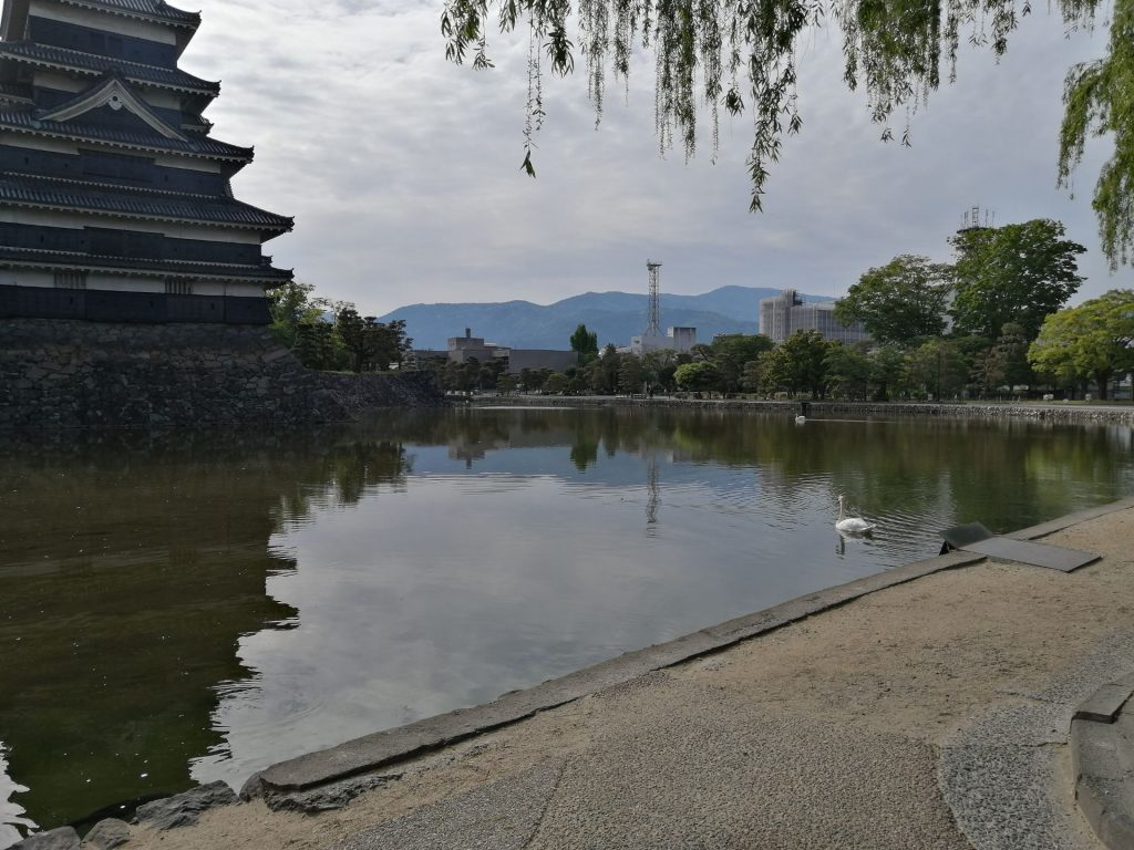 松本城とお堀に優雅に浮かぶ白鳥