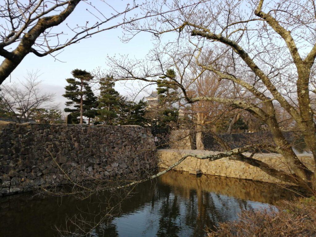 3月20日現在まだまだつぼみ桜の松本城の標本木