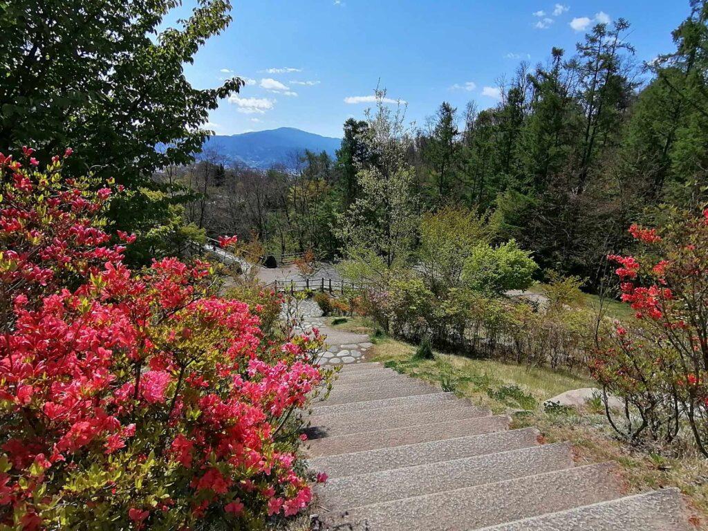 ツツジの花と架け橋