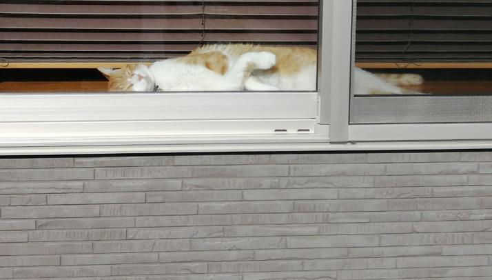 窓辺ですやすや眠る猫