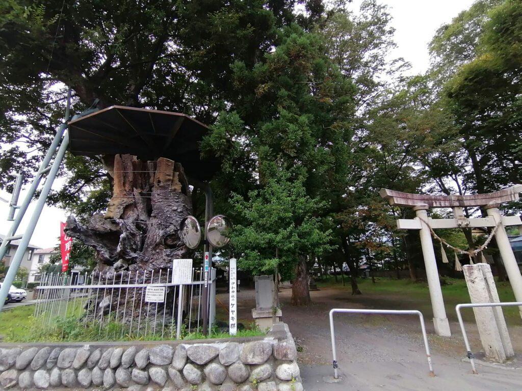 伊和神社の境内入口に立つけやき